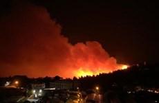 Liban trải qua thảm họa cháy rừng tồi tệ nhất trong nhiều thập kỷ