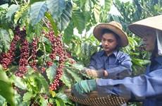 Việt Nam đang đứng thứ hai thế giới về xuất khẩu càphê