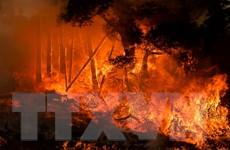 Bang California của Mỹ nỗ lực chống chọi với 10 đám cháy rừng