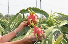 Việt Nam và Italy thúc đẩy hợp tác vùng, phát triển sản xuất nông sản