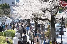 Nhật Bản hủy tiệc ngắm hoa anh đào năm 2020 do bị chỉ trích tốn kém