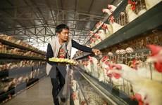 Trung Quốc dỡ bỏ hạn chế nhập khẩu các sản phẩm gia cầm của Mỹ