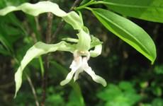Một phần ba hệ thực vật nhiệt đới tại châu Phi có nguy cơ tuyệt chủng