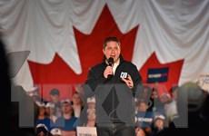 Canada: Lãnh đạo đảng Bảo thủ đối lập tuyên bố từ chức