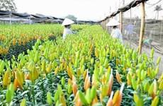 [Video] Làng hoa Tây Tựu - điểm du lịch muôn sắc hoa ở Hà Nội