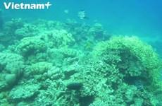 [Video] Đến Cù Lao Chàm lặn ngắm san hô tuyệt đẹp dưới đáy biển