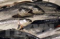 Nga sẽ cấm nhập khẩu cá hồi Na Uy qua Belarus từ đầu năm 2020