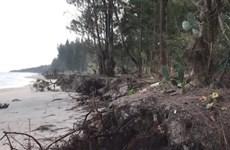 [Video] Quảng Ngãi: Triều cường xâm thực nghiêm trọng bờ biển Mỹ Khê