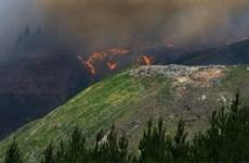 ''Bà hỏa'' bắt đầu lan đến những cánh rừng của New Zealand