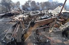 Lan truyền nhiều tin giả về cháy rừng ở Australia trên mạng xã hội