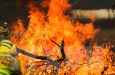 Australia: Nền nhiệt tăng, nguy cơ nhiều đám cháy rừng tái bùng phát