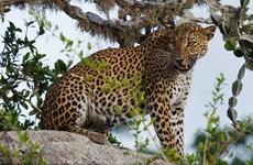 Sri Lanka tăng cường hệ thống pháp luật bảo vệ động vật hoang dã