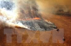 Khí carbon từ cháy rừng ở Australia tương đương với cháy rừng Amazon