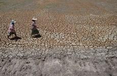Thái Lan: Hạn hán và xâm nhập mặn ảnh hưởng nặng nề đến người dân