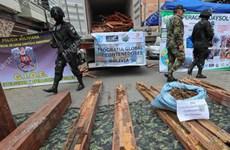 Bolivia thu 1,5 tấn ma túy giấu trong các khối gỗ vận chuyển tới Bỉ