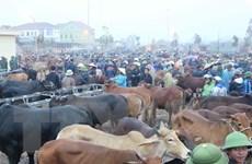 Chợ trâu bò lớn nhất Đông Nam Á giao dịch phiên cuối cùng trong năm