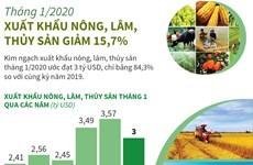 [Infographics] Tháng 1/2020: Xuất khẩu nông, lâm, thủy sản giảm 15,7%