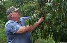 Bayer AG, BASF bồi thường nông dân Mỹ bị ảnh hưởng thuốc diệt cỏ