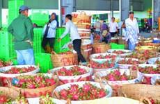 [Video] Giá thanh long tăng vọt lên mức 45.000 đồng mỗi kg