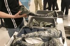 Đối tượng vận chuyển gần 30kg sừng tê giác bị bắt sau 14 ngày cách ly