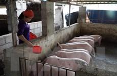 Giá thịt lợn hơi sẽ xuống 70.000 đồng mỗi kg kể từ ngày 1/4