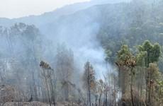 Trộm mật ong rừng gây cháy rừng nghiêm trọng tại Cà Mau