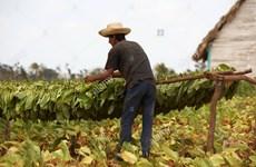Cuba trải qua tháng Ba khô hạn nhất trong lịch sử 60 năm qua