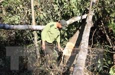 Lâm Đồng sẽ xử lý người đứng đầu địa phương để xảy ra phá rừng