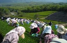 Nhật Bản hỗ trợ người thất nghiệp tìm việc trong lĩnh vực nông nghiệp