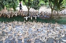 Nam Định xử lý nghiêm doanh nghiệp vi phạm hợp đồng thuê đất của dân