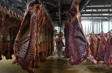Hàng trăm ca nhiễm COVID-19 ở các cơ sở chế biến thịt ở châu Âu