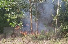 Hỏa hoạn bùng phát tại khu rừng keo ngay sát sân bay Đà Nẵng