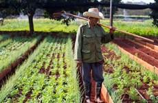 FAO hỗ trợ 119 triệu USD giúp Cuba phát triển nông nghiệp bền vững