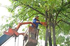 Hà Nội phòng, chống ngập úng, cắt tỉa cây xanh trong mùa mưa bão