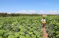 Trà Vinh hỗ trợ hơn 40 tỷ khôi phục sản xuất sau thiệt hại do hạn mặn