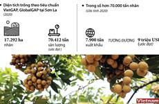 [Infographics] Xuất khẩu 9 triệu USD nhãn Sơn La trong năm 2020