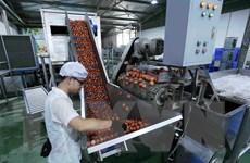 Xuất khẩu rau quả sang thị trường ''khó tính'' tăng trưởng tốt