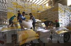 Việt Nam có khả năng vượt Thái Lan về xuất khẩu gạo