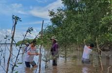 Việt-Hàn chung sức phục hồi rừng ngập mặn tại tỉnh Trà Vinh