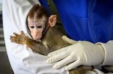 Chuyên gia cảnh báo những thay đổi mã di truyền của virus SARS-CoV-2