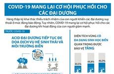 [Infographics] COVID-19 mang lại cơ hội phục hồi cho các đại dương