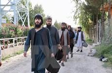 Afghanistan thúc đẩy lệnh một ngừng bắn trong đàm phán với Taliban