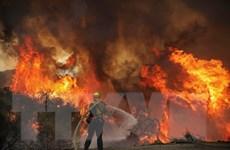 Mỹ: Hơn 800.000 hécta rừng đã bị thiêu rụi ở bang California