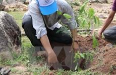Lâm Đồng: Buộc một đối tượng phá rừng phải trồng lại hơn 1,4ha rừng
