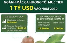 [Infographics] Ngành macca hướng tới mục tiêu 1 tỷ USD vào năm 2030