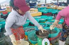 Khánh Hòa: Giá nhiều mặt hàng thủy sản đã tăng trở lại