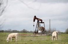 Giá dầu trên thị trường châu Á giảm phiên thứ hai liên tiếp