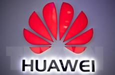 Huawei được trao thưởng về giải pháp truy cập cố định tốt nhất