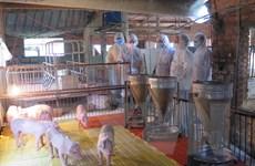 Việt Nam sẽ 'sạch bóng' dịch tả lợn châu Phi vào năm 2025