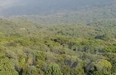Gần 4% dự án đề xuất được chấp thuận chuyển đổi mục đích sử dụng rừng